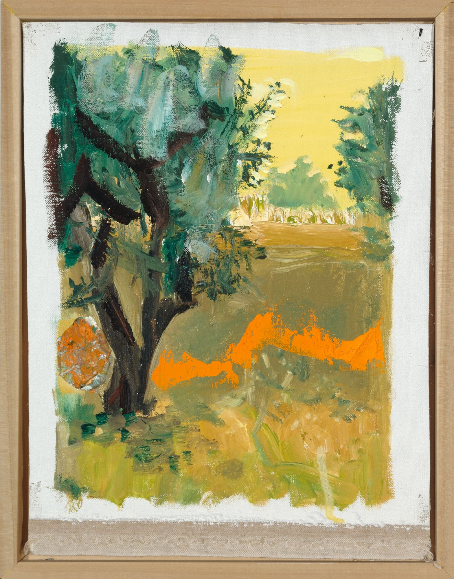 Olive Grove With Orange Light